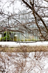 greenhouse_winter